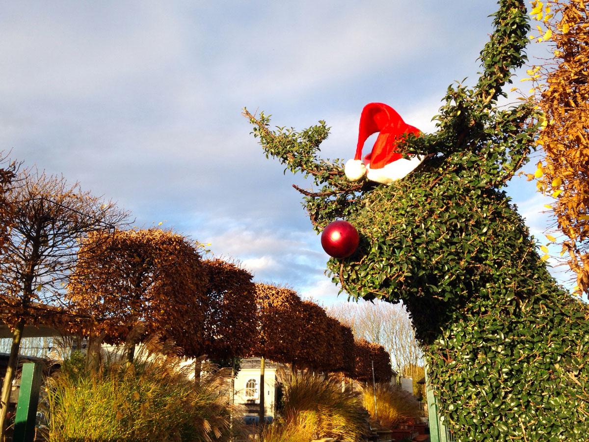 Rudolph enjoying Clifton Nurseries Surrey