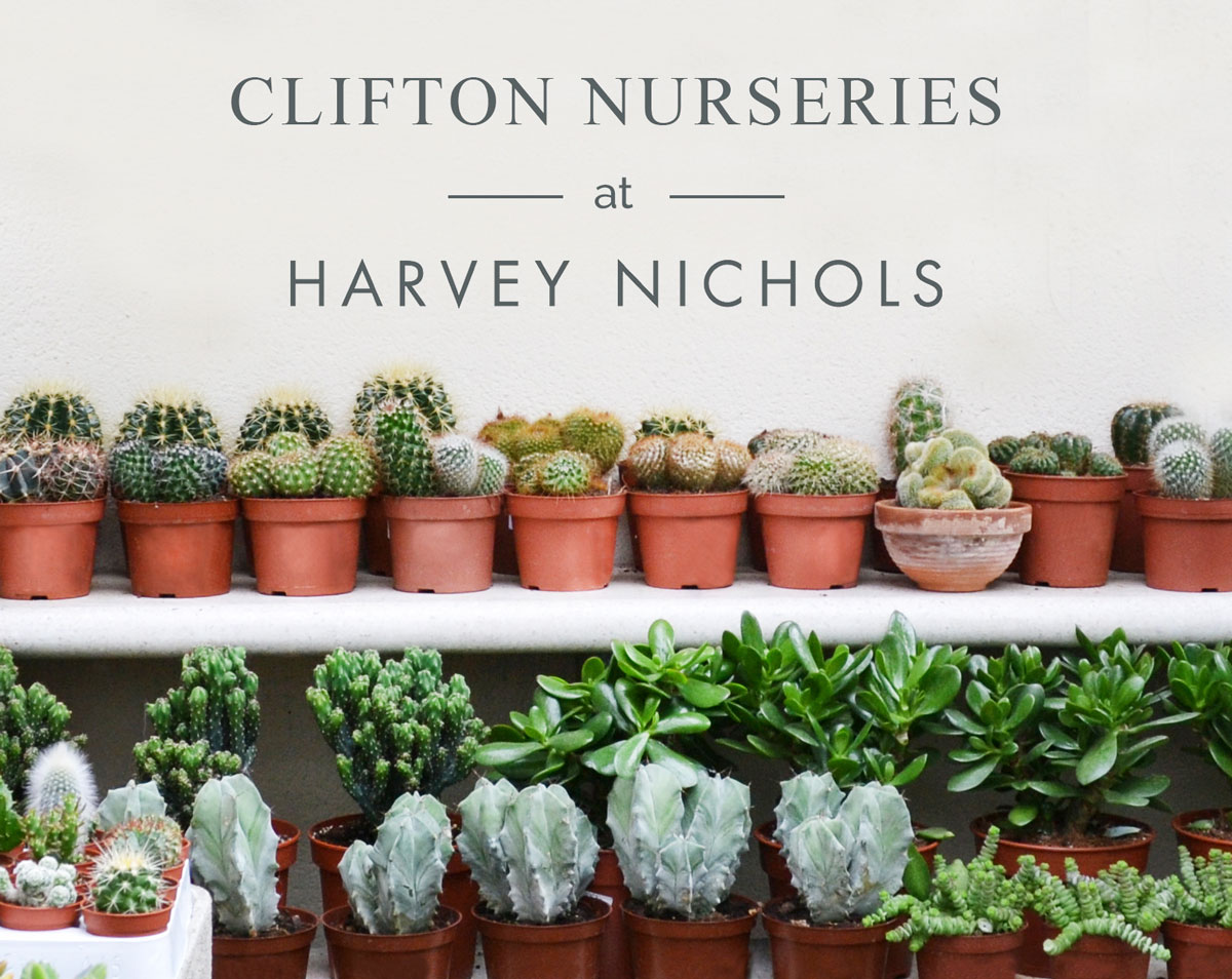 Clifton Nurseries at Harvey Nichols