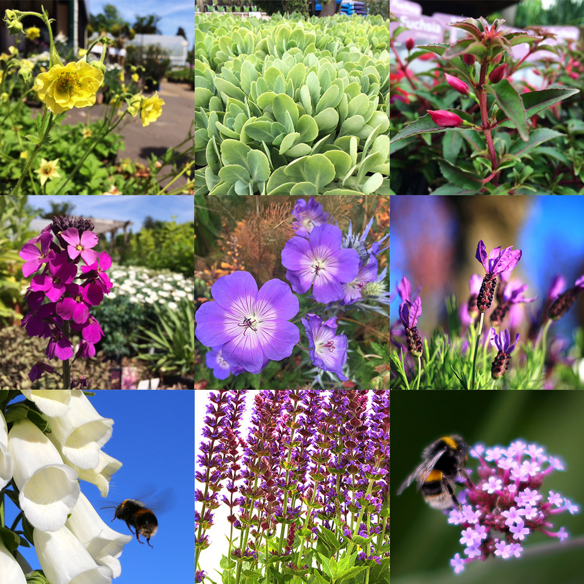 ​Clifton Nurseries Bee-Friendly Plants