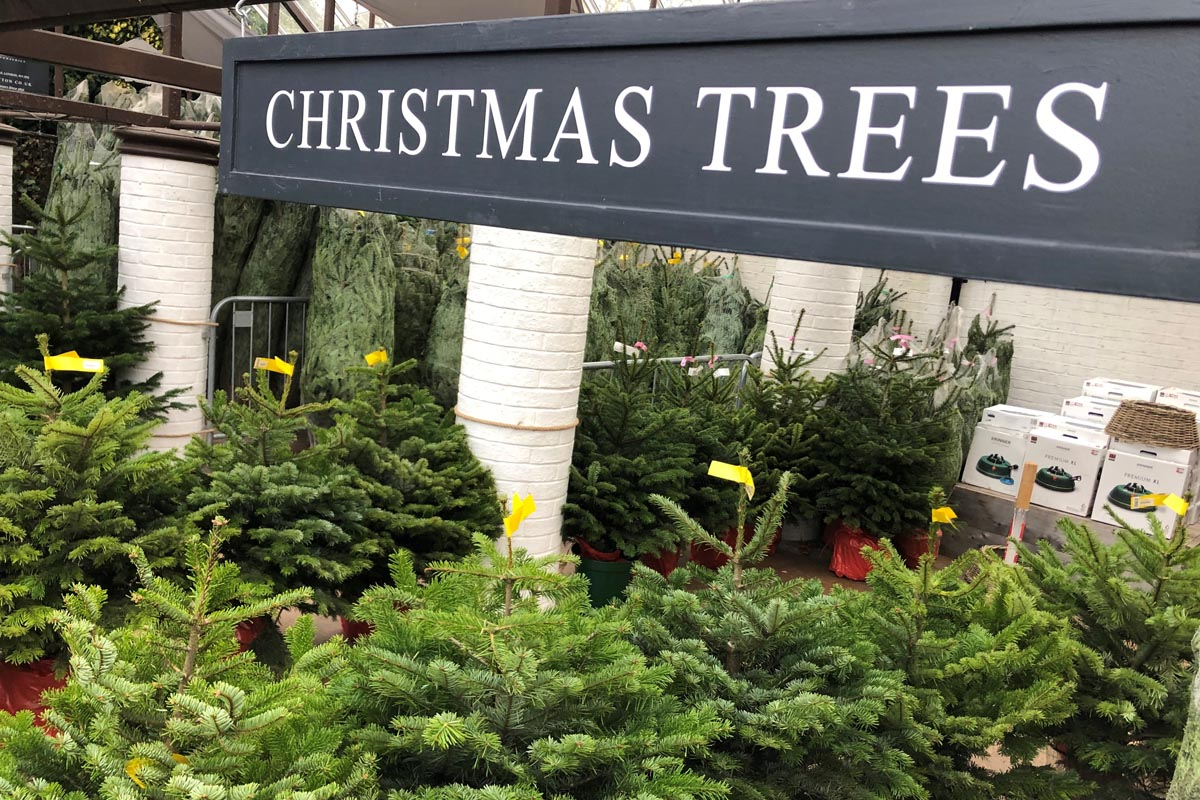Potted and cut Christmas trees now in!