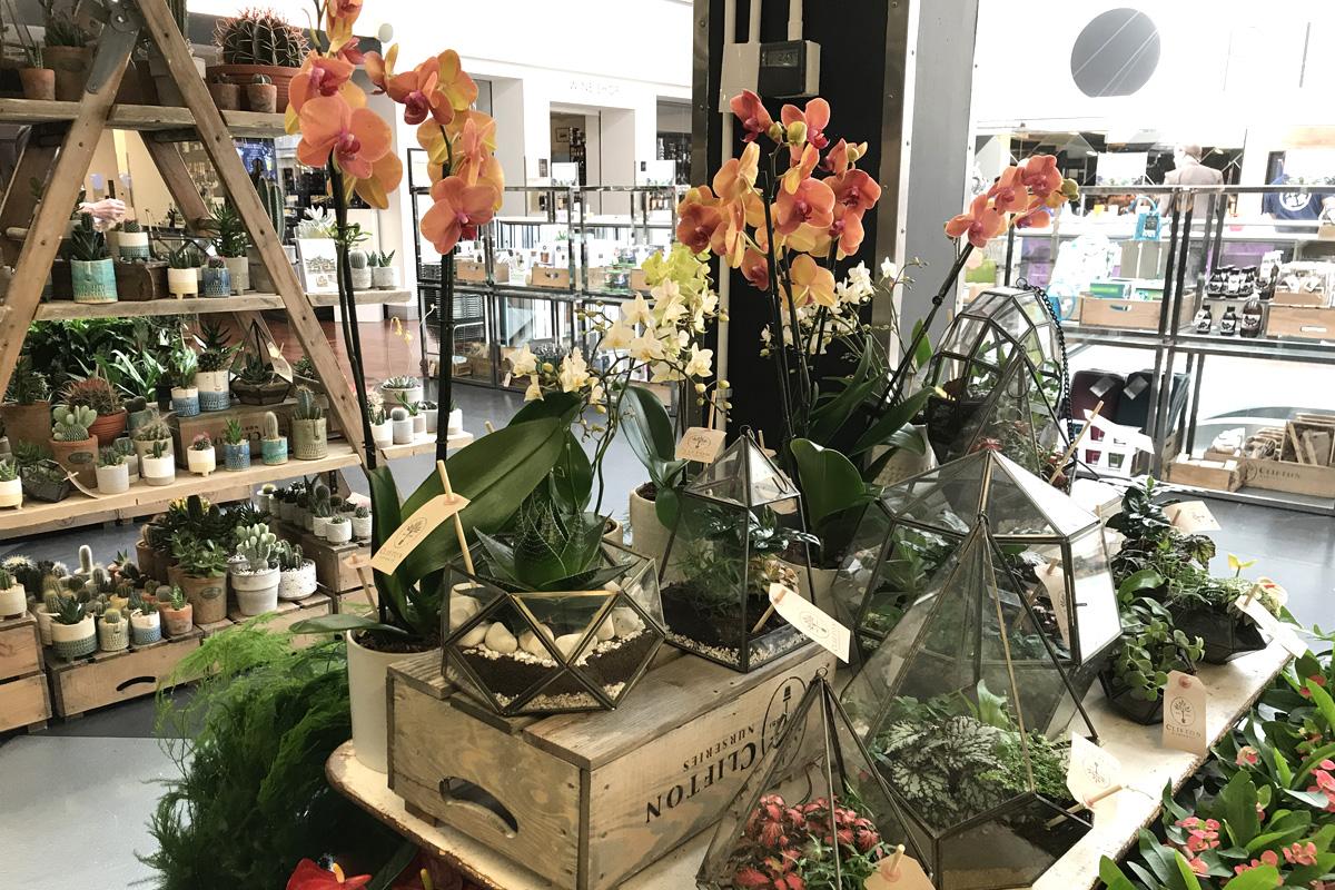 Horticultural treats at Harvey Nichols