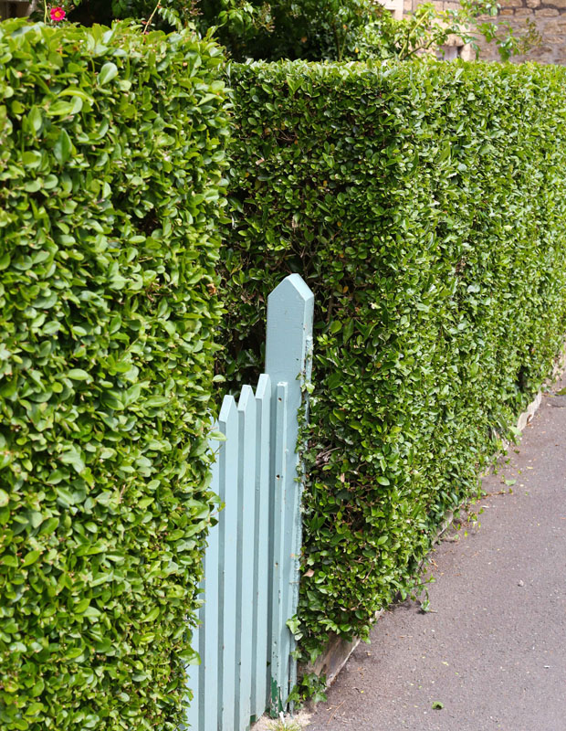 Looking for a hedge?