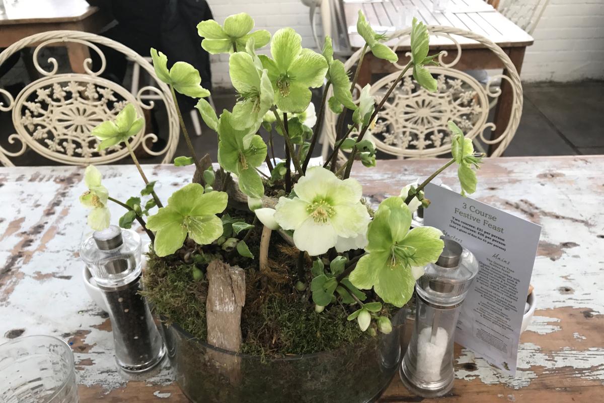 Helleborus Verboom® Beauty - Table Decoration