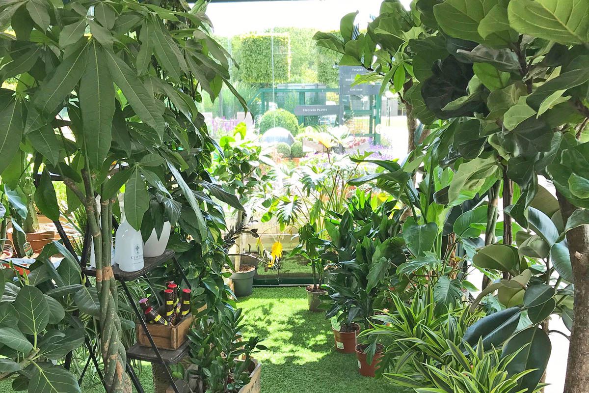 Large houseplants now at Clifton Surrey too