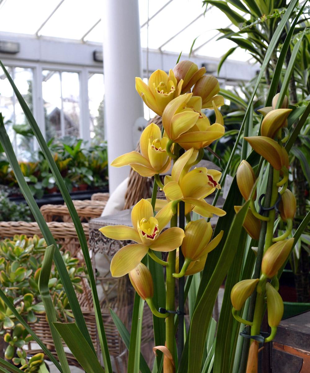 Clifton Nurseries London Houseplants
