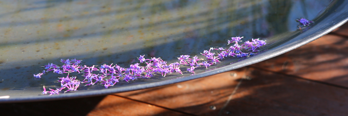 The Golden Hour - Floating Flowers of Verbena bonariensis