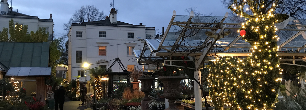 Clifton Nurseries Rudolph Topiary