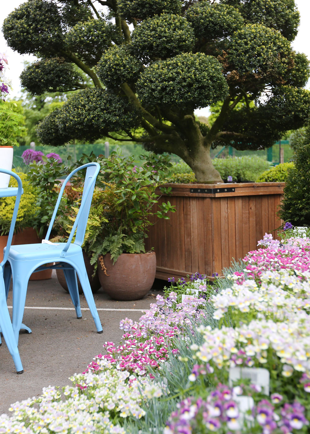 Clifton Nurseries Expert Buyers