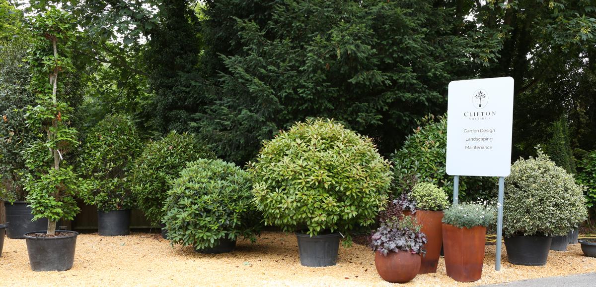 Clifton Nurseries Surrey specimen plant display
