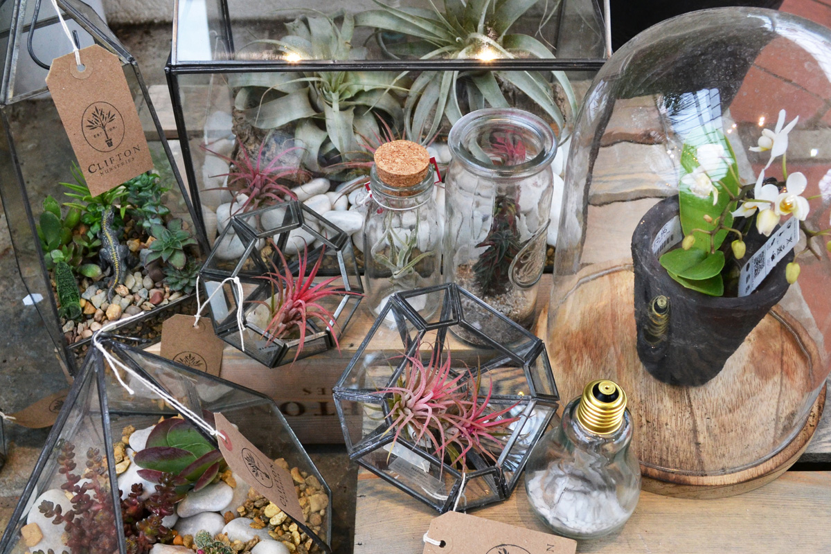 The temptation of terrariums