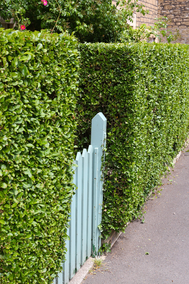 Enhance your garden with a hedge
