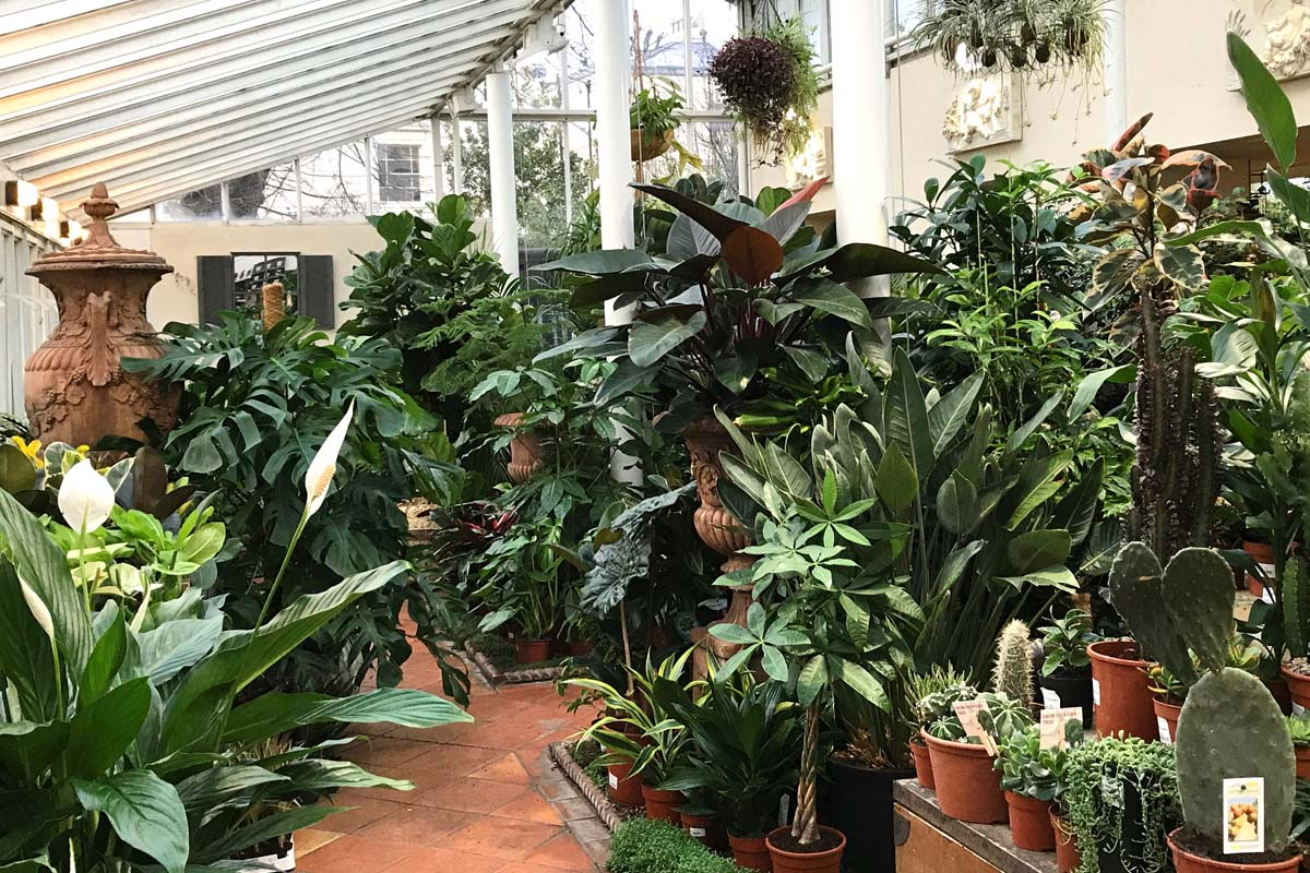 Going green for January with Clifton Nurseries