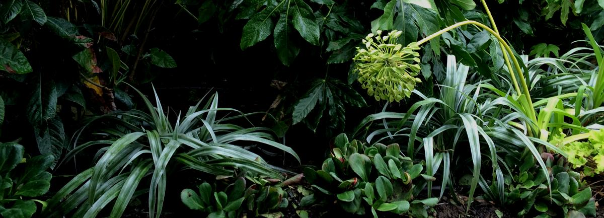 Textured foliages