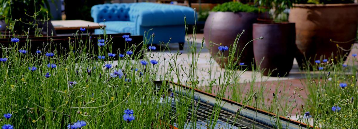 Clifton Nurseries Blog Planning Dream Garden