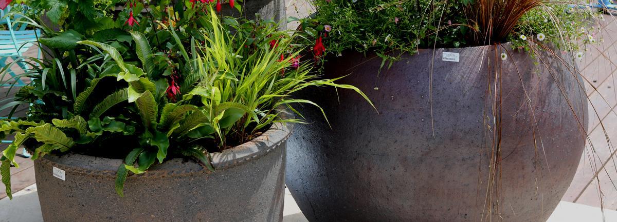 Clifton Nurseries Pots and Planters Blog