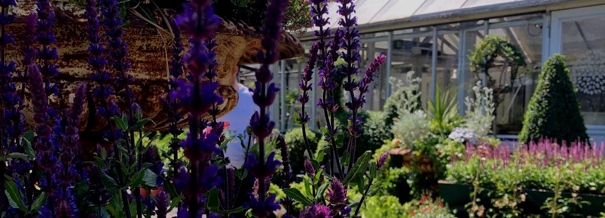 The Quince Tree Cafes at Clifton Nurseries are Currently Closed