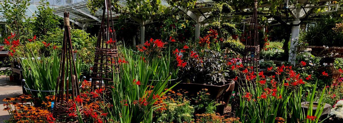 Clifton Nurseries Job Vacancy - Horticulture and Garden Accessories Buyer
