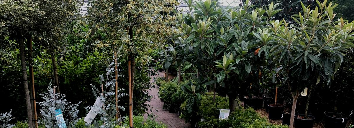 Clifton Nurseries Surrey - Trade Promotion