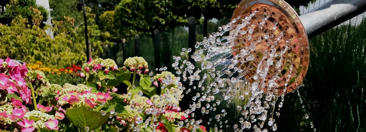 Watering Tips from Clifton Nurseries