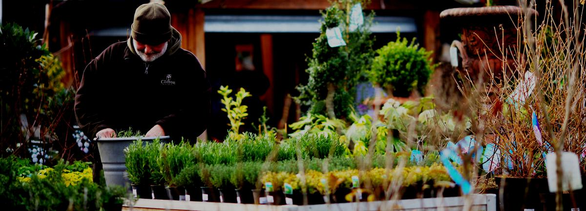 Clifton Nurseries Exciting Website News
