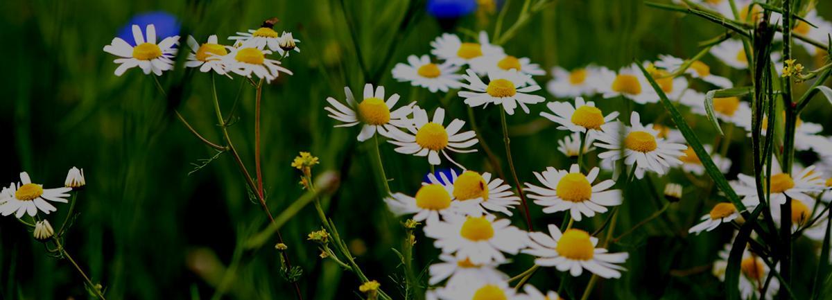 Clifton Nurseries Colourful Garden Memories