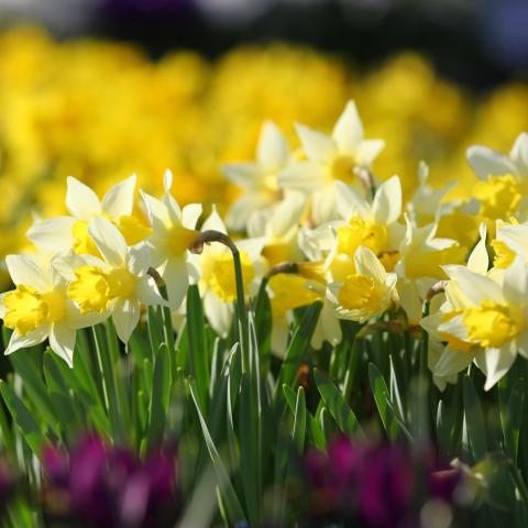 Stepping into Spring Event at Clifton Nurseries Surrey
