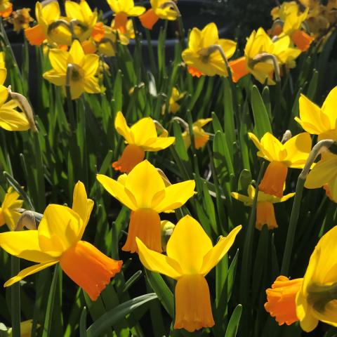 Clifton Nurseries Easter Opening Hours