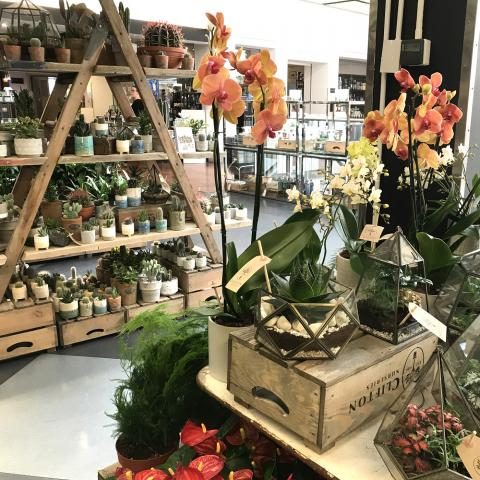 Clifton Nurseries at Harvey Nichols