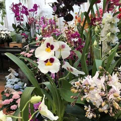 20% off houseplants in January at Clifton Nurseries