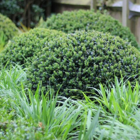 Clifton Nurseries Job Vacancy - Garden Maintenance and Landscaper