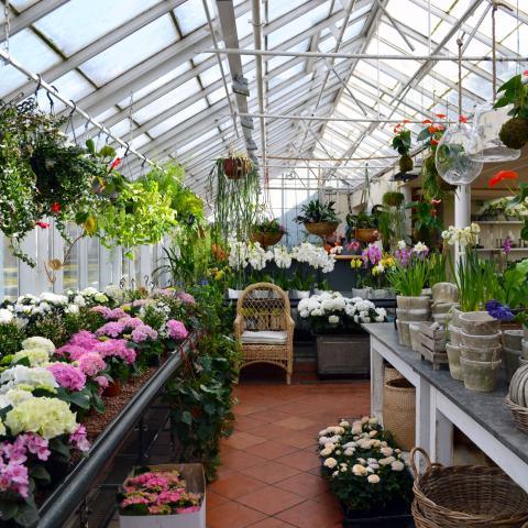 Clifton Nurseries Job Vacancy Retail Assistant