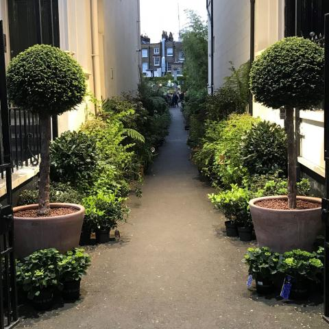 Clifton Nurseries London - Late Night Shopping every Wednesday