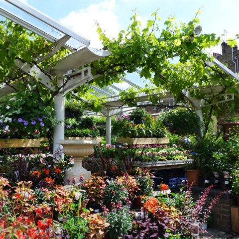 Clifton Nurseries London Job Vacancy