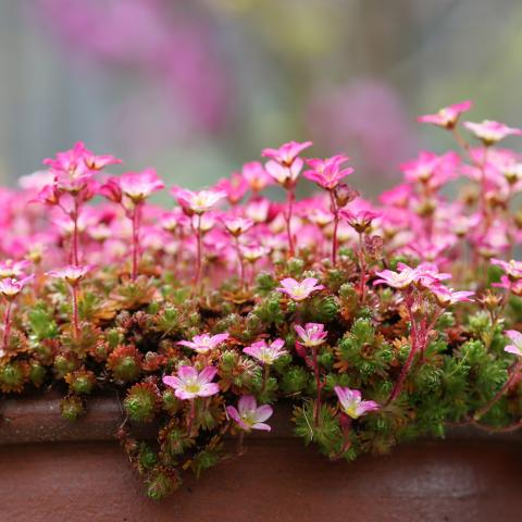 New year resolutions of a garden lover