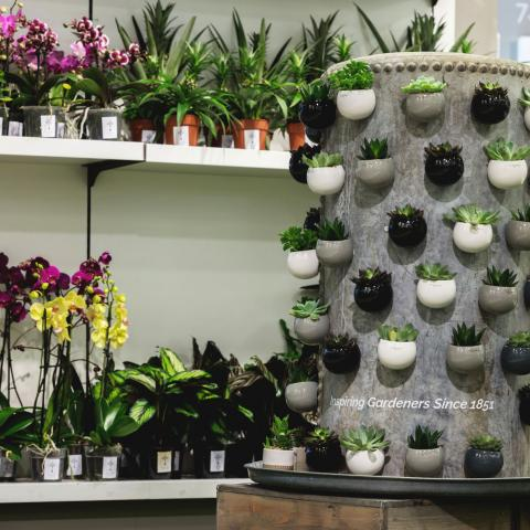 Clifton Nurseries at Peter Jones