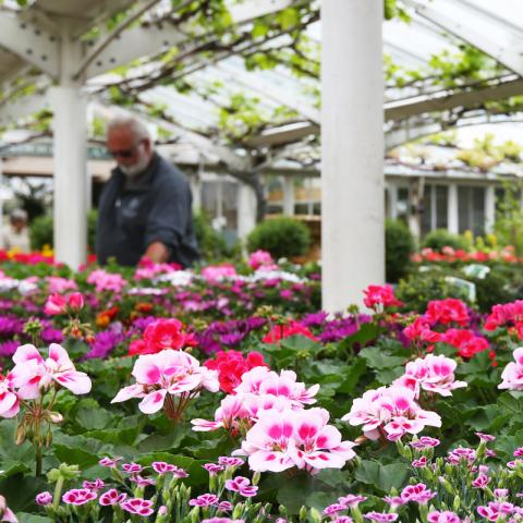 Job Vacancy - Retail Sales Manager at Clifton Nurseries London