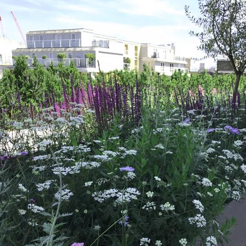 Beautiful plant scheme on Selfridges Roof Terrace