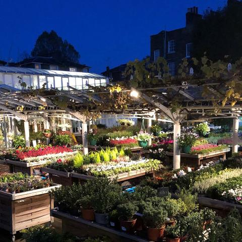 Clifton Nurseries are open as usual