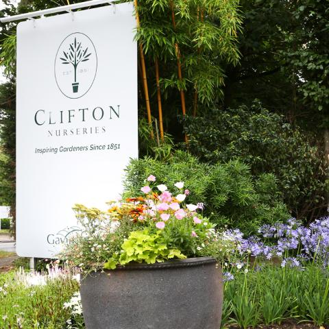 Clifton Nurseries Surrey Front Entrance