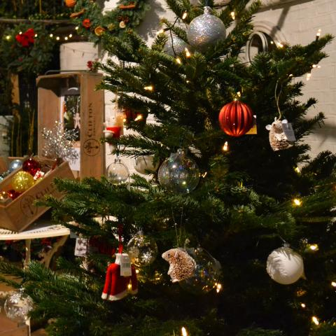 Clifton Nurseries Top Tips for Christmas Trees