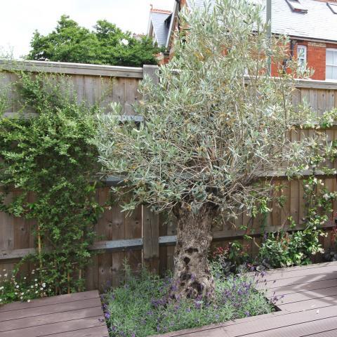 Town Courtyard Garden - Clifton Nurseries