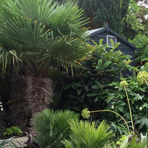 Clifton Nurseries - Tropical Garden