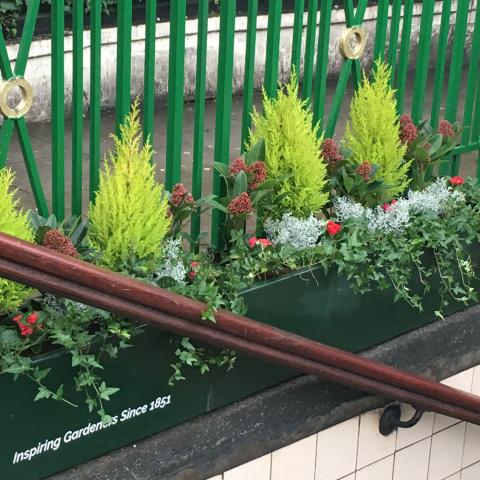 Clifton Nurseries plants at Warwick Avenue Station