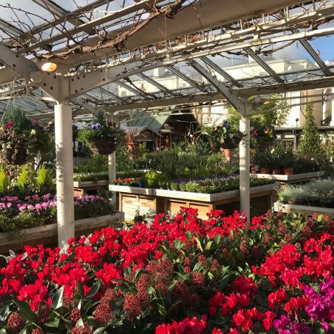 Clifton Nurseries News