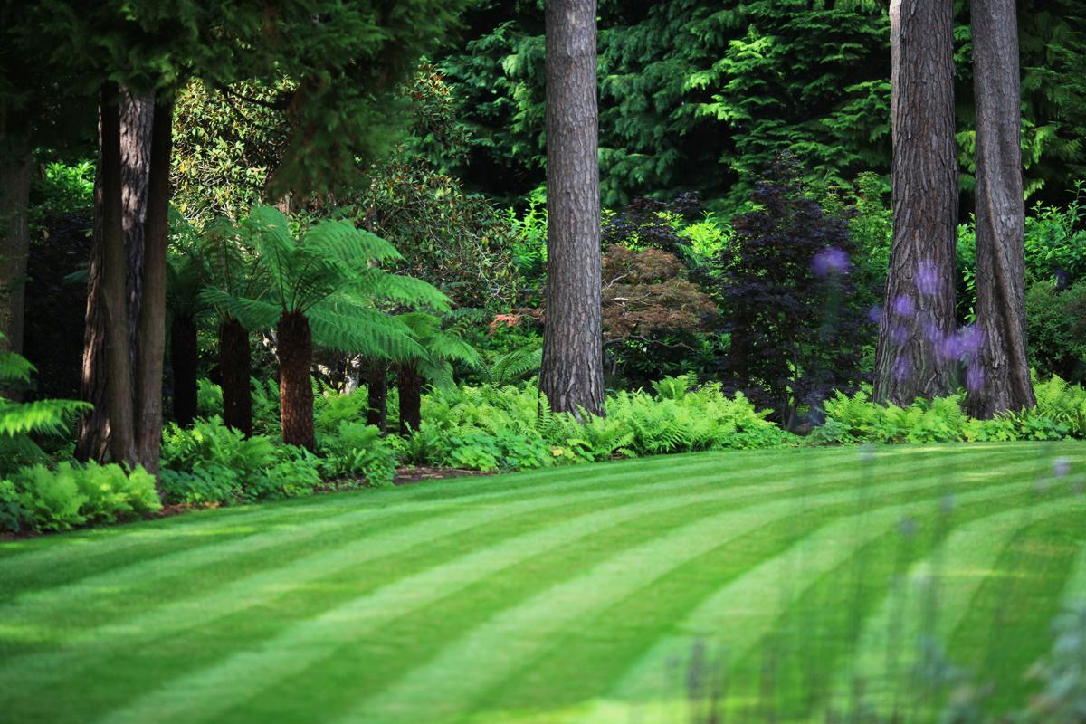 Woodland planting schemes