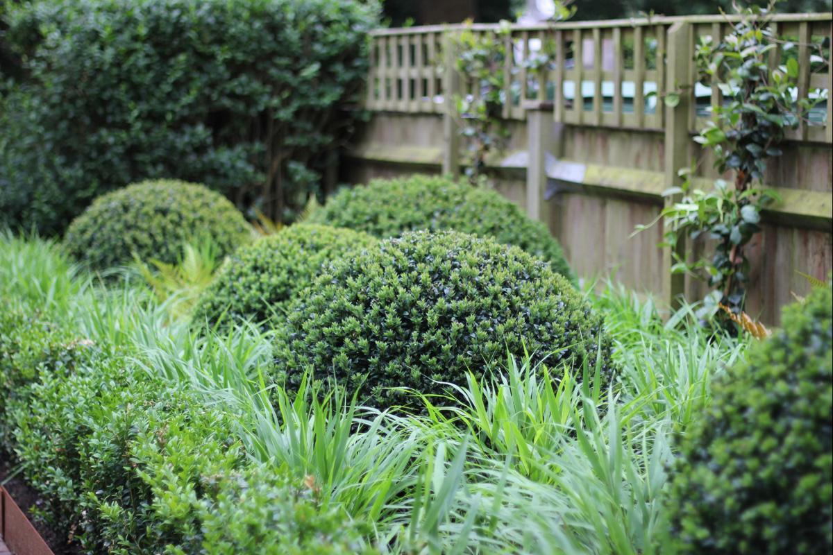 Contemporary Townhouse Garden - Buxus Balls