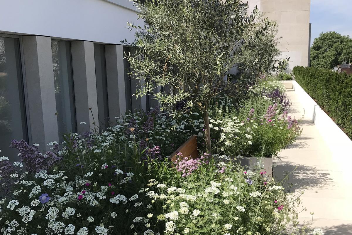 Selfridges roof terrace - planted by Clifton Nurseries