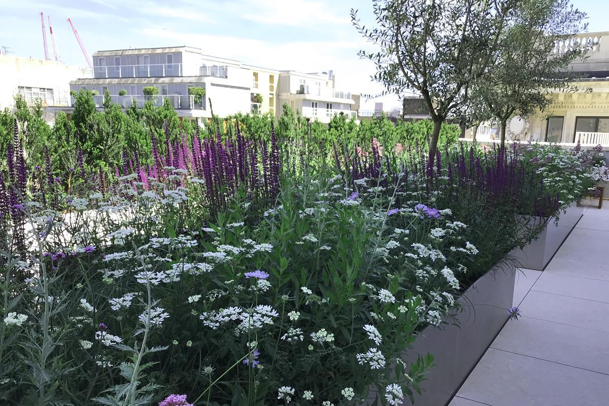 Beautiful plant scheme on Selfridges Roof Terrace
