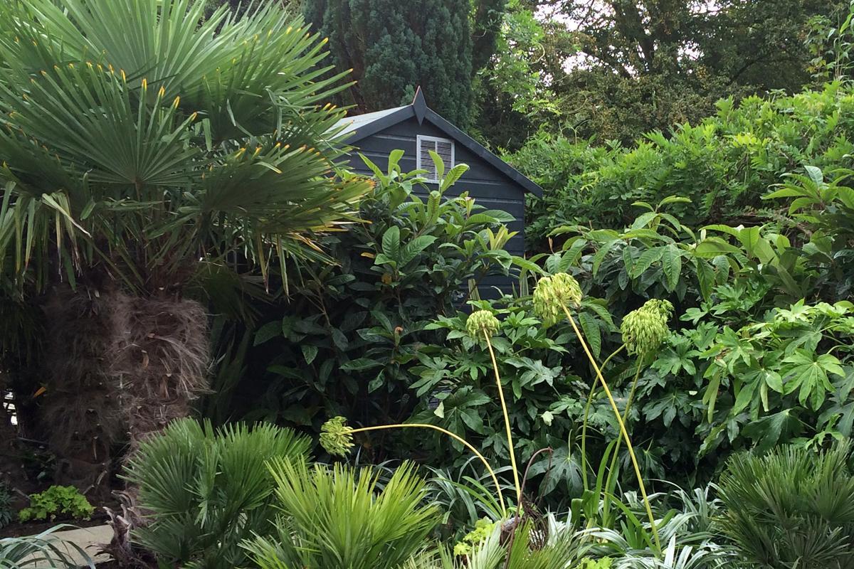 Lush Tropical Planting