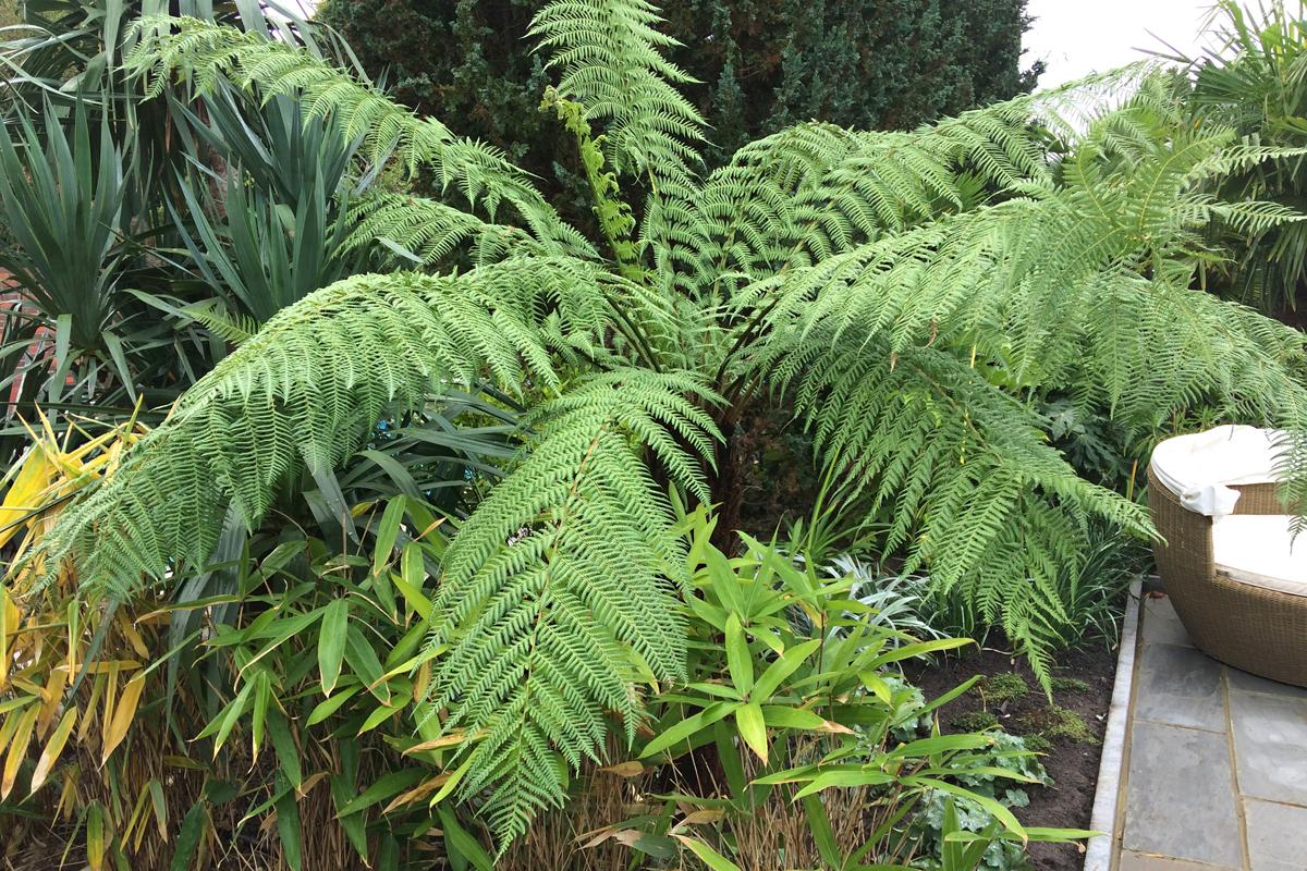 Tree ferns used to create drama and style
